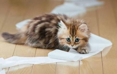 Як привчити кошеня ходити в лоток