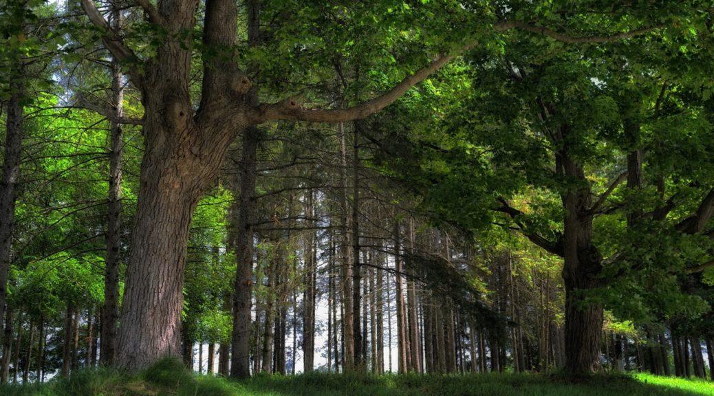 Загадки про ліс на українській мові