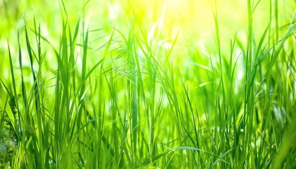 Чому трава зелена