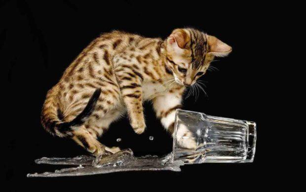 Чого коти бояться води