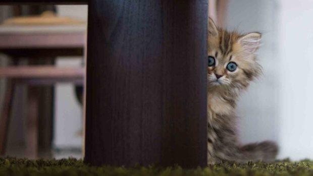 Чого коти бояться незнайомців