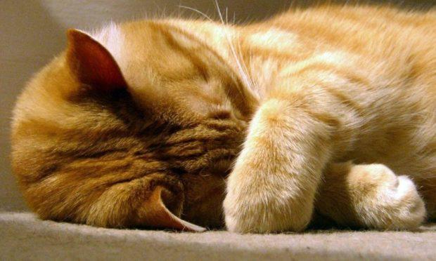 Чого коти бояться запахів