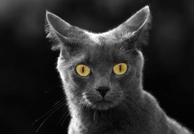 Чого коти бояться гучних звуків