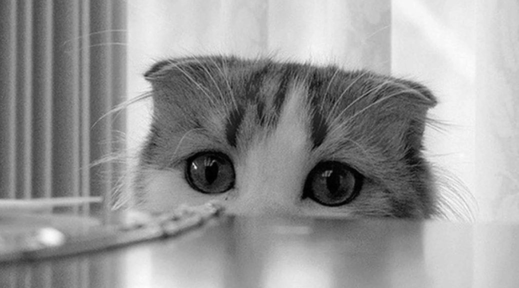 Чого не люблять коти та чому