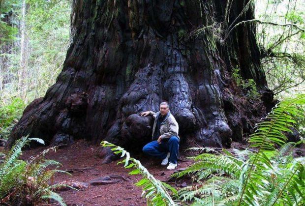 Найбільше дерево у світі
