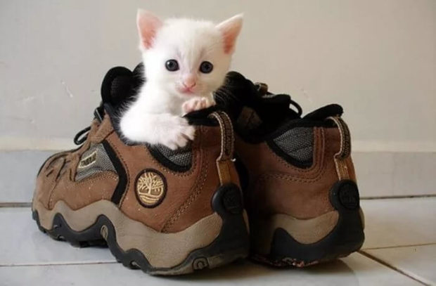 Як позбутися запаху котячої сечі на взутті