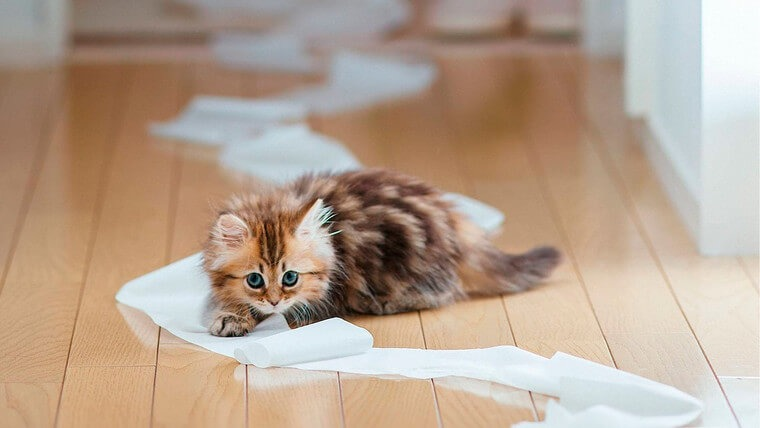 Як позбутися запаху котячої сечі в домашніх умовах