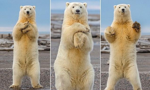 Розповідь про білого ведмедя для дітей