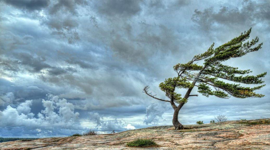 Які бувають вітри