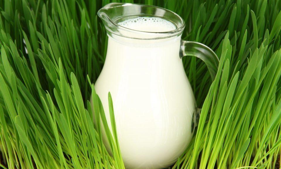 Чому молоко біле