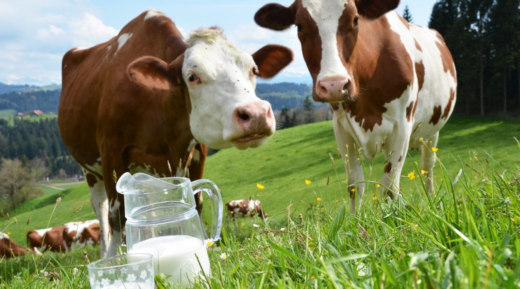 Загадки про корову на українській мові для дітей