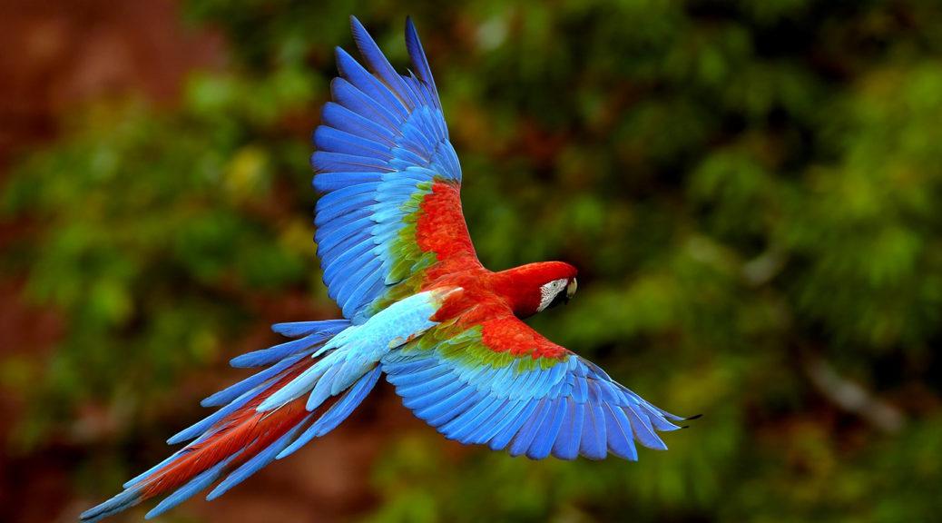 Загадки про папугу для дітей