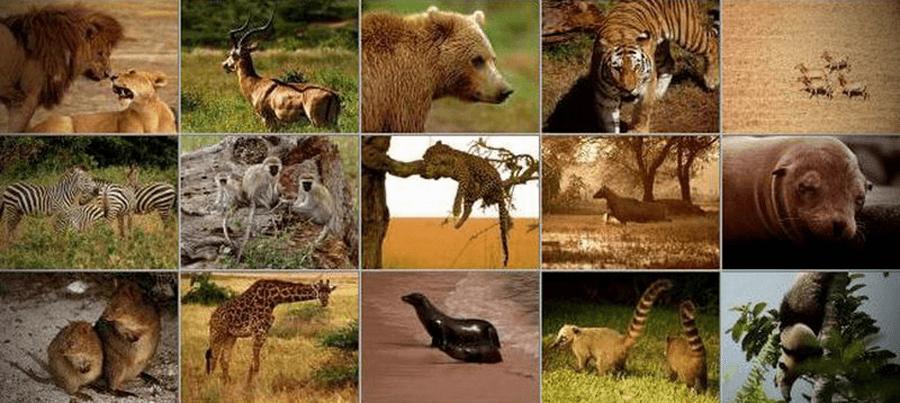 Цікаві факти про ссавців