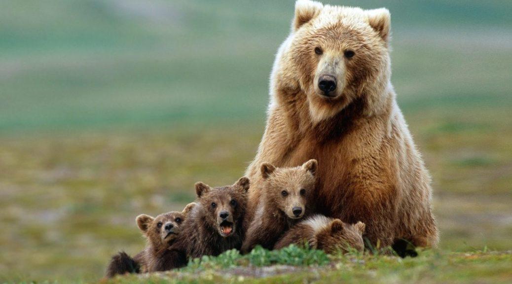 Загадки про ведмедя на українській мові для дітей