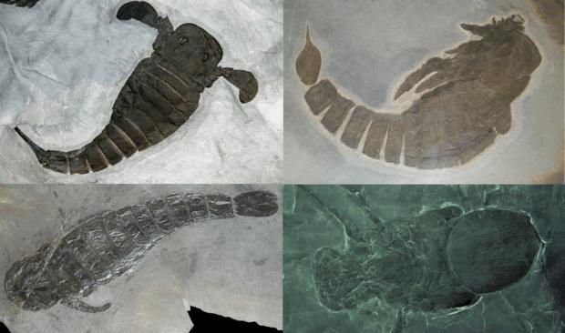 Цікавий факт про скорпіона