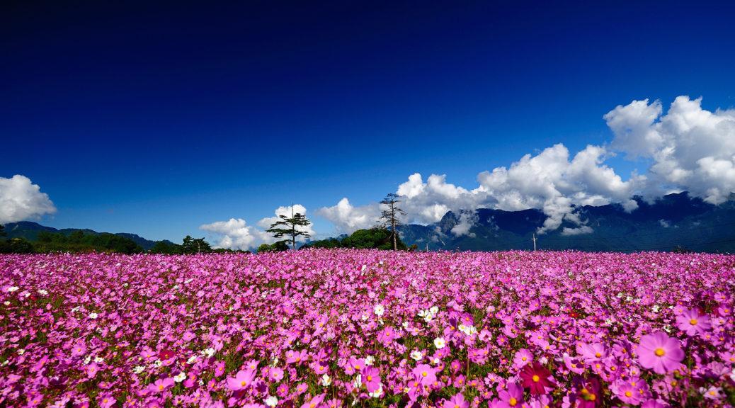 Цитати, афоризми, мудрі вислови про квіти українською моовю
