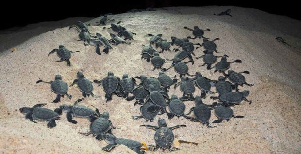 Цікавинки про черепах