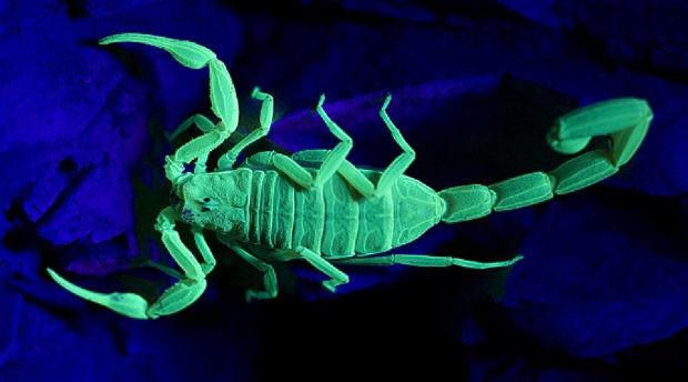 Цікавинки про скорпіонів