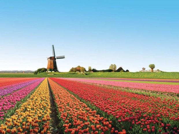 Цікавинки про нідерланди