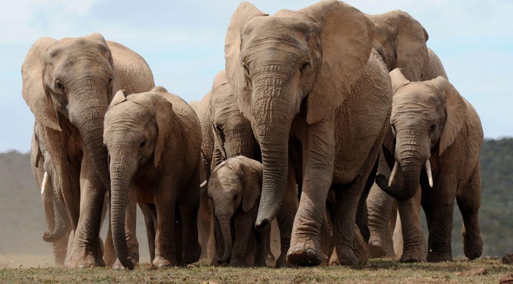 Загадка про слона на українській мові