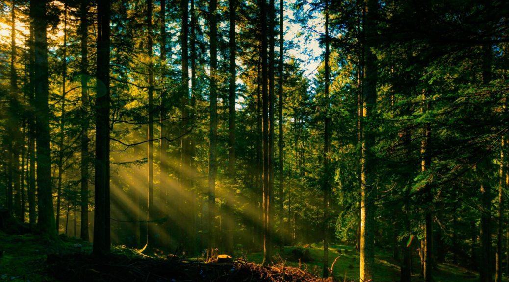 Цитати вислови афоризми про ліс