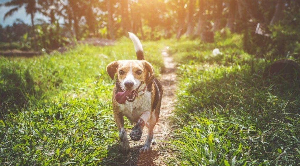 загадка про собаку на українській мові