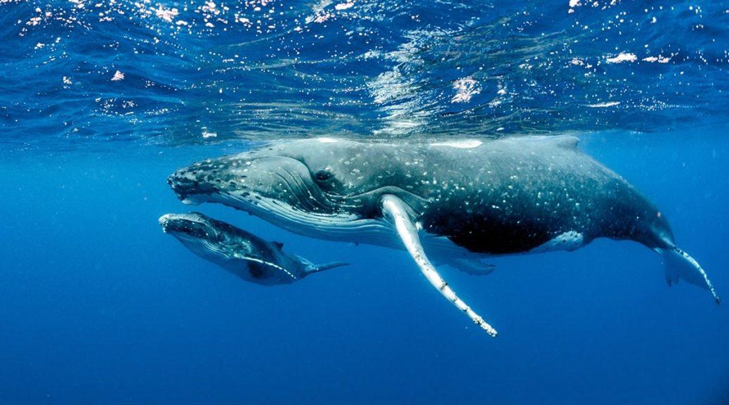 Загадки про кита на українській мові