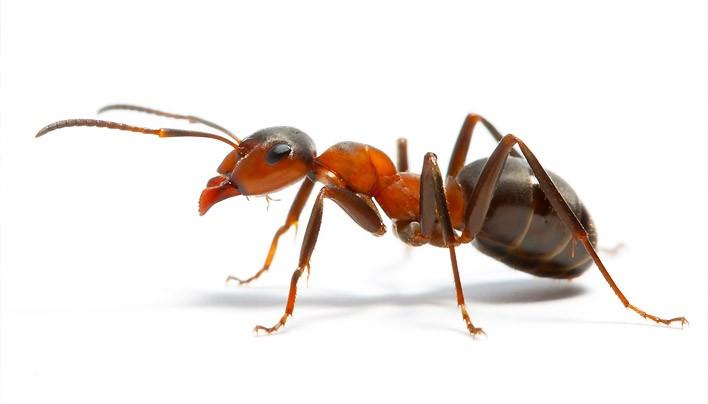 Загадки про мурах на українській мові