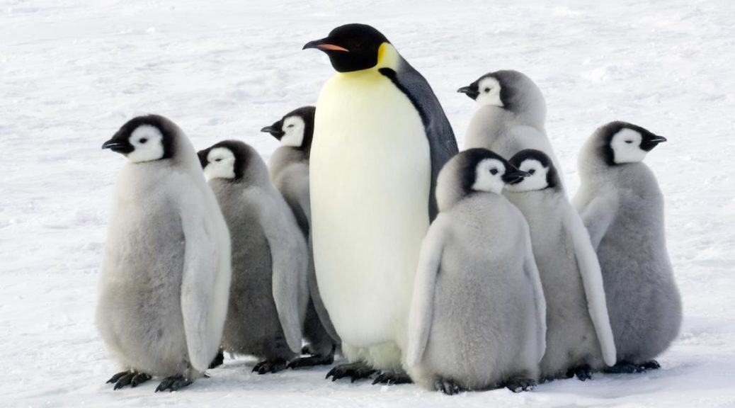 Загадки про пінгвінів на українській мові