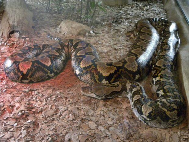 Цікаве про змій