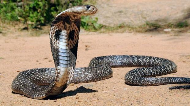 Цікаві факти про змій